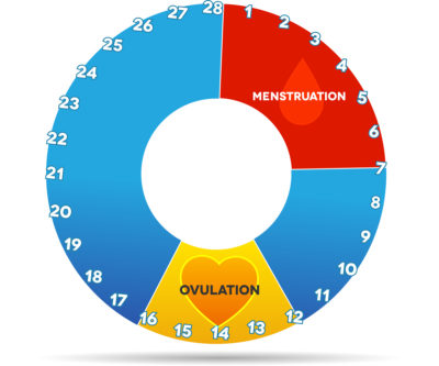 How to tell when a woman is fertile: Ovulation chart | Menstruation chart