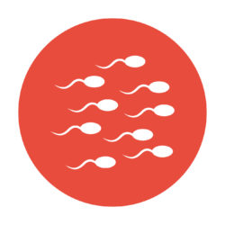 Sperm fragmentation Loma Linda University